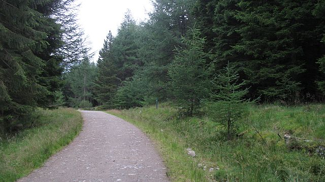 Road, Glen Doll Forest - geograph.org.uk - 943977
