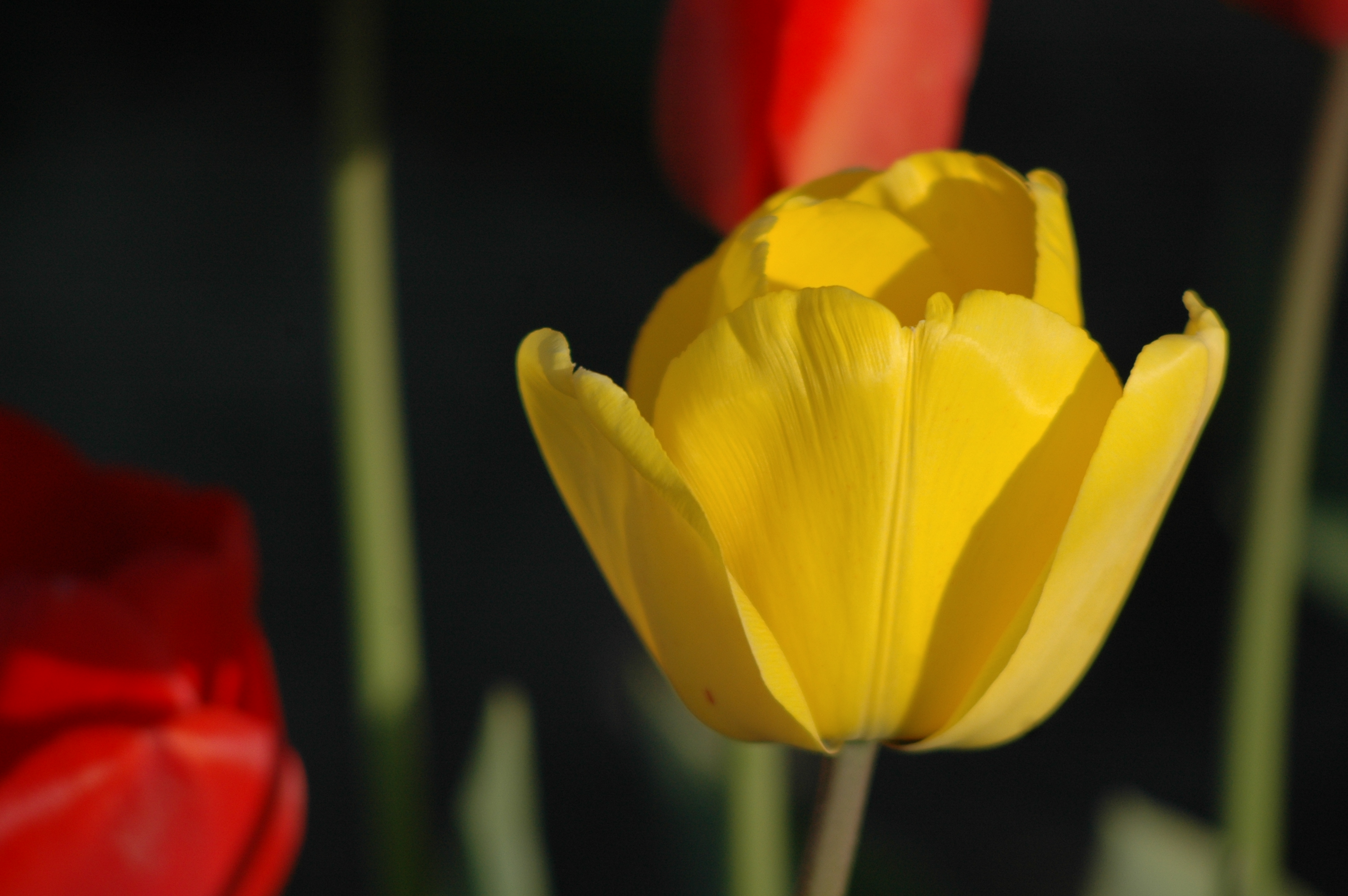 gula blommor betydelse