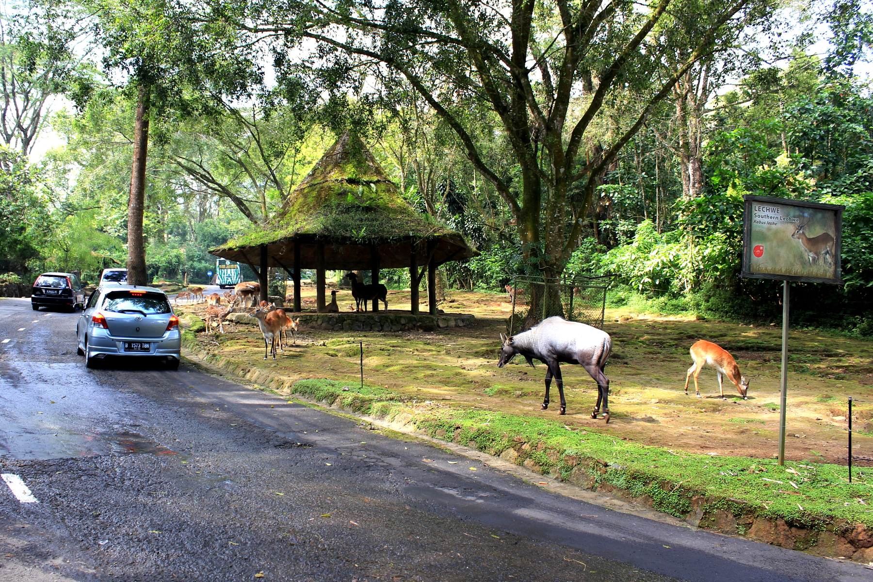 Taman Safari Wikipedia