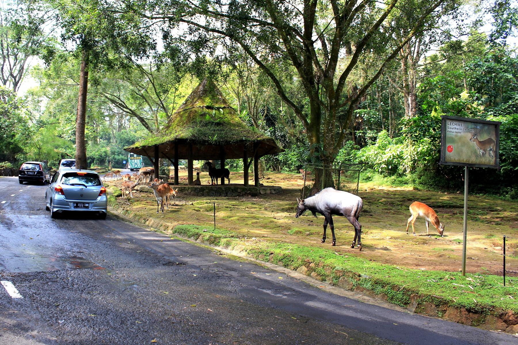 Bali safari and marine park or taman safari iii is a branch of taman