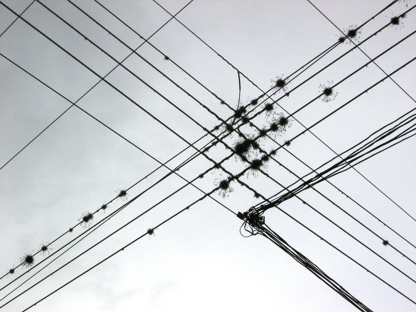 Electricity Wire | Wire Wikipedia