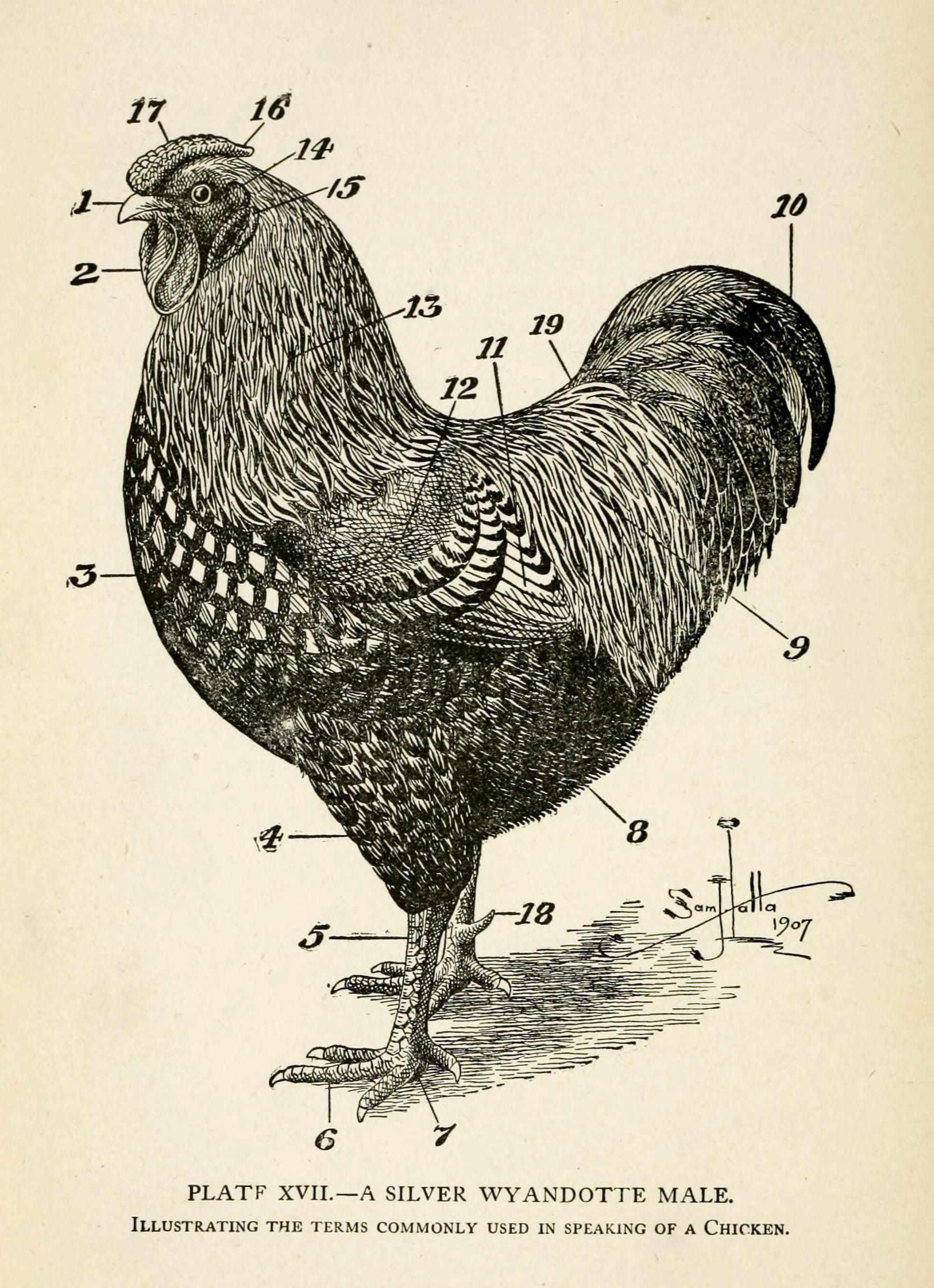 Chicken Beak Anatomy Images - human body anatomy