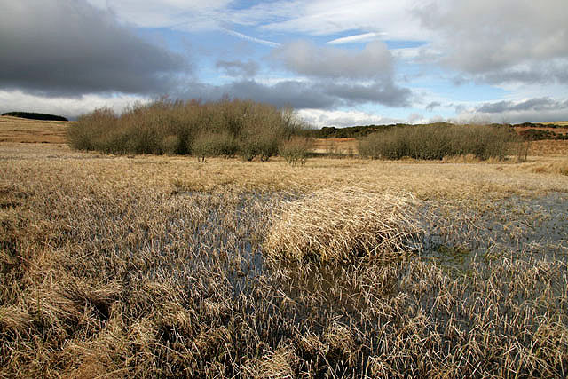 File:A mossland area at Selkirk Common - geograph.org.uk - 1174576.jpg