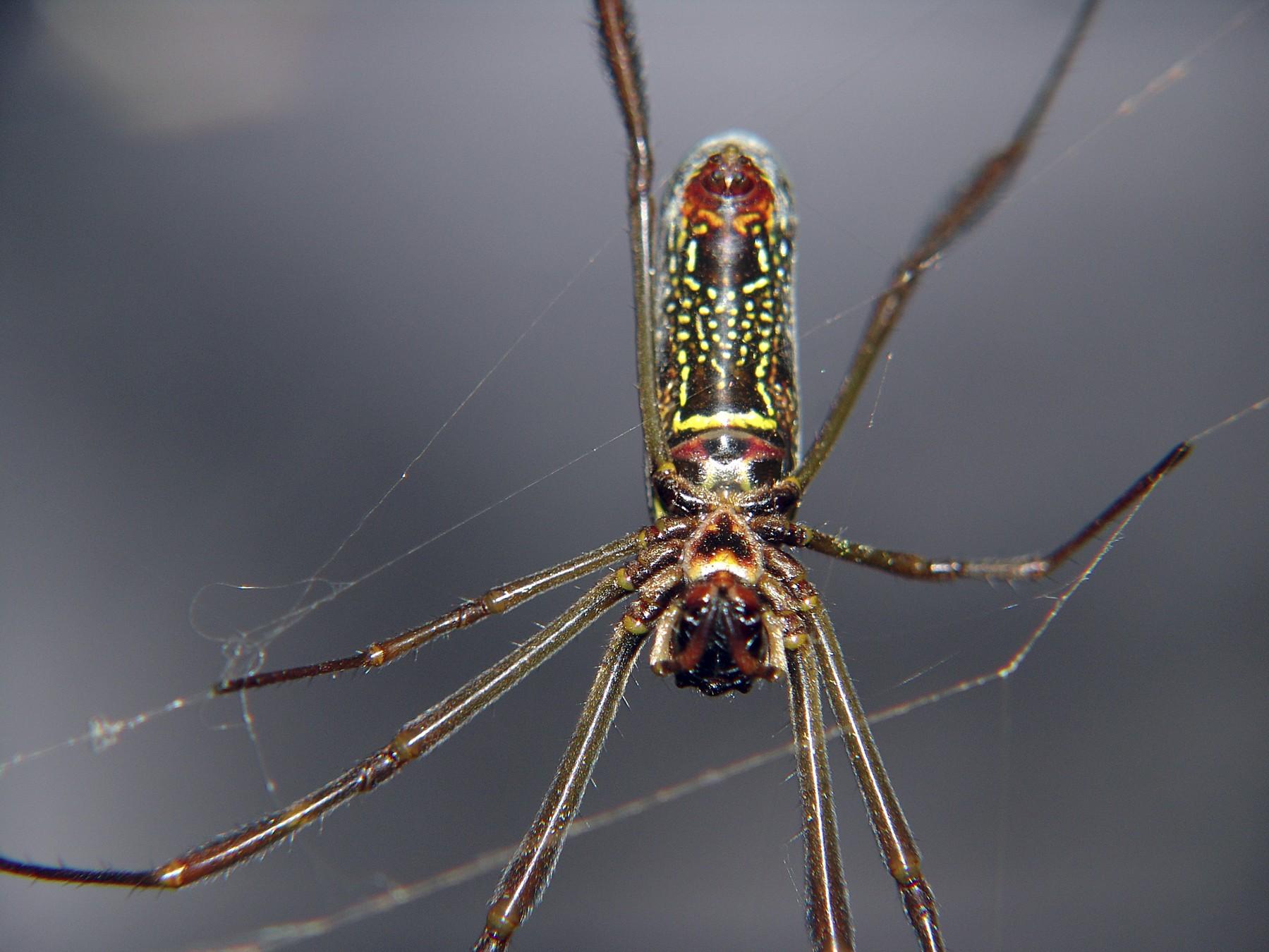 Fotos de aranhas marrom 52