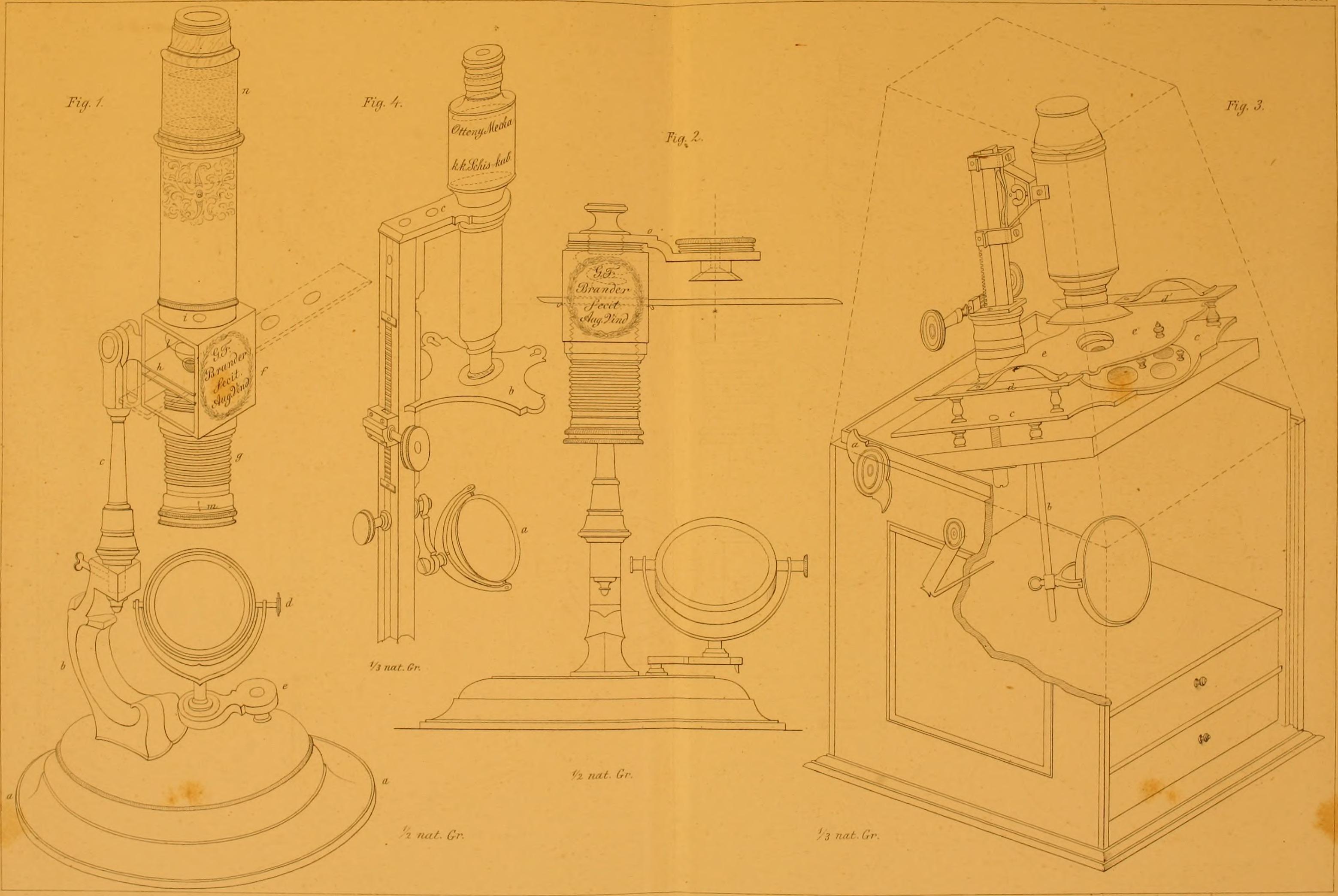 Ausgezeichnet Makroskopische Anatomie Und Physiologie Bilder ...