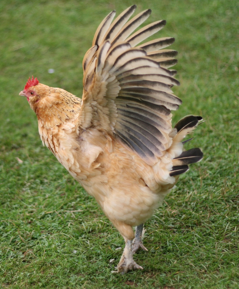 Chicken Of The Sea Frozen Foods New York