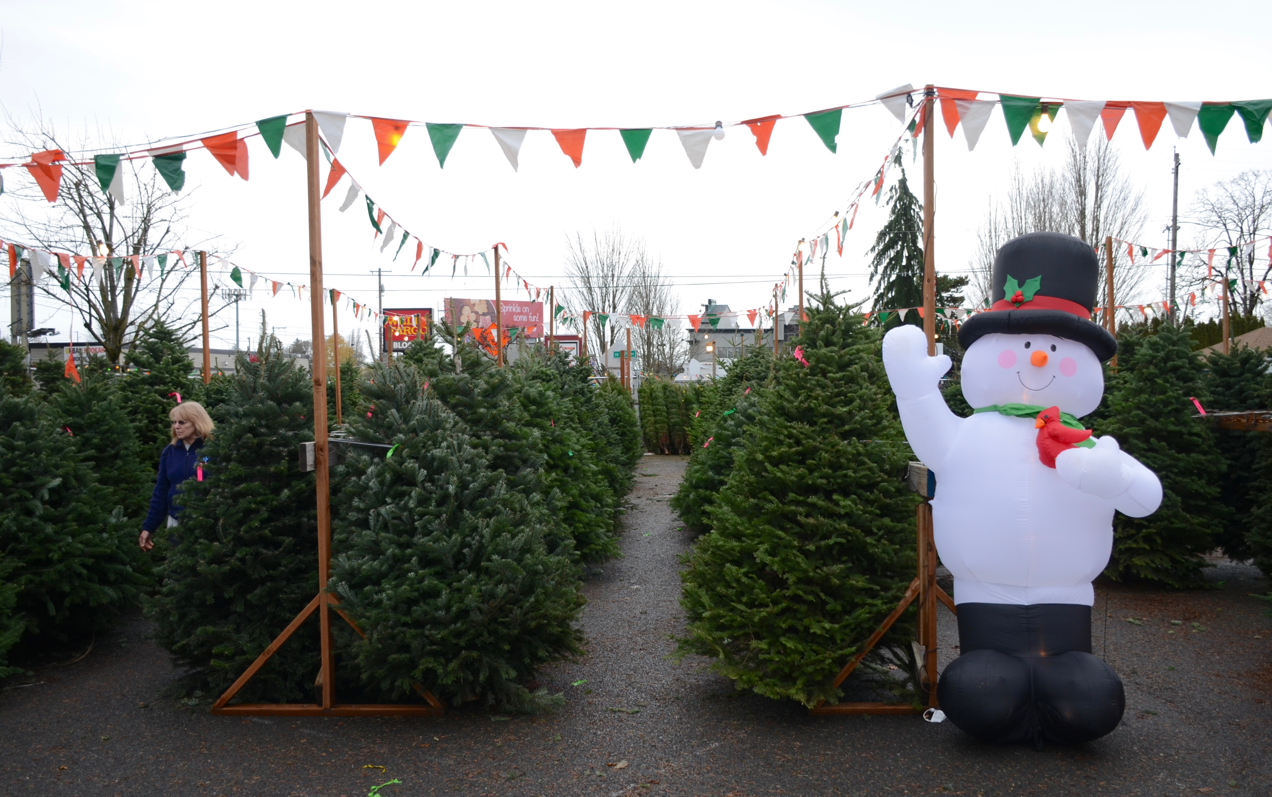 File:Christmas tree lot in Aloha, Oregon (2015).jpg ...