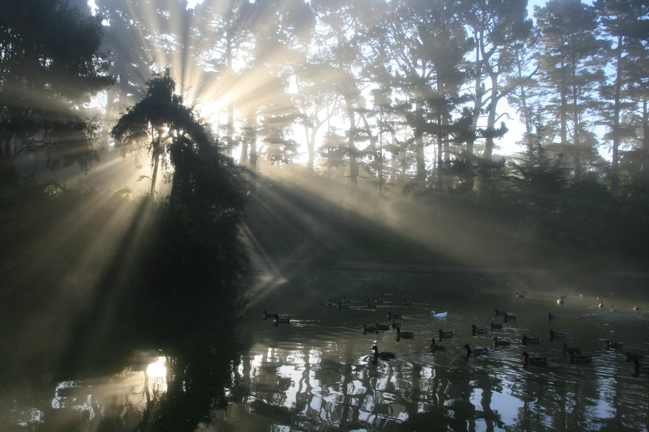 The sun's rays stab through the trees at Lloyd Lake in Golden Gate Park, San Francisco.
