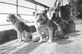 Animals aboard the RMS <i>Titanic</i>