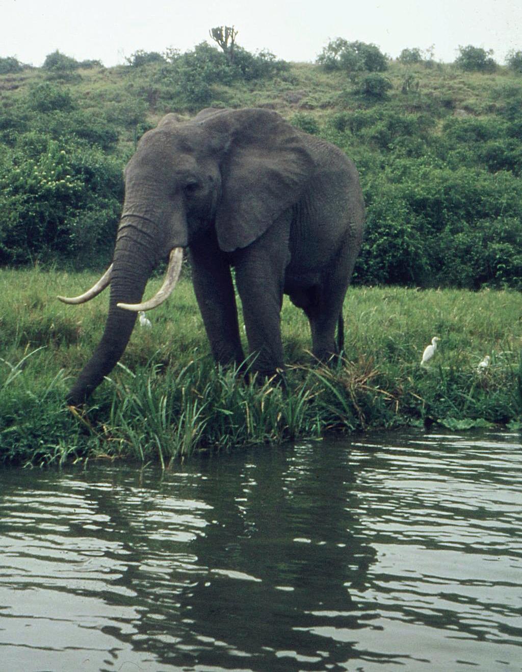 Können Elefanten Springen