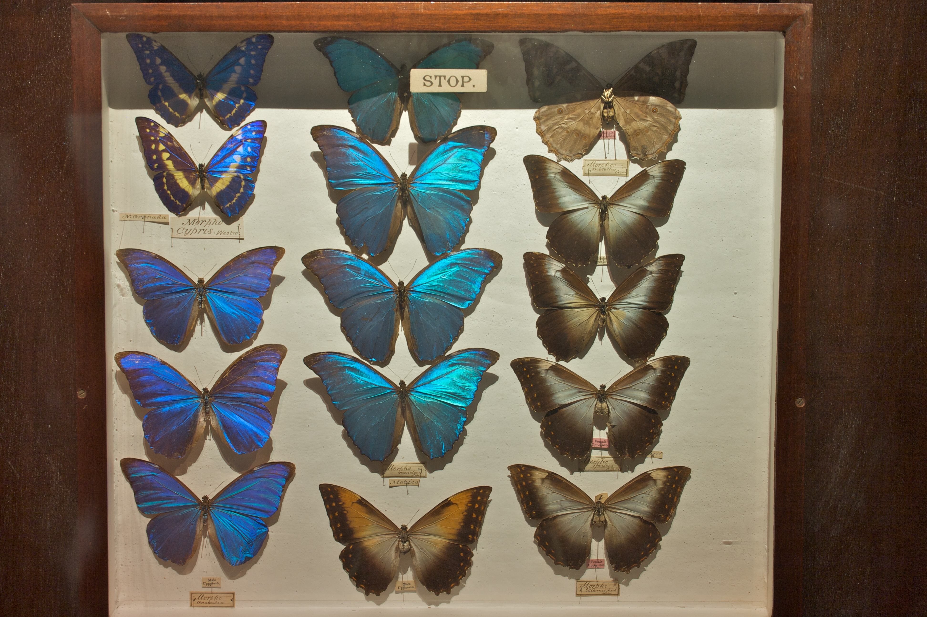 Beau File:Exotic Butterflies At The Horniman Museum