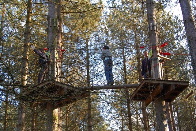 In the tree tops, Moors Valley Country Park, Dorset - geograph.org.uk - 1175326