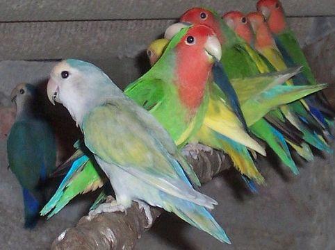 Cage A Oiseaux Decoration Pour Exterieur Pas Cher