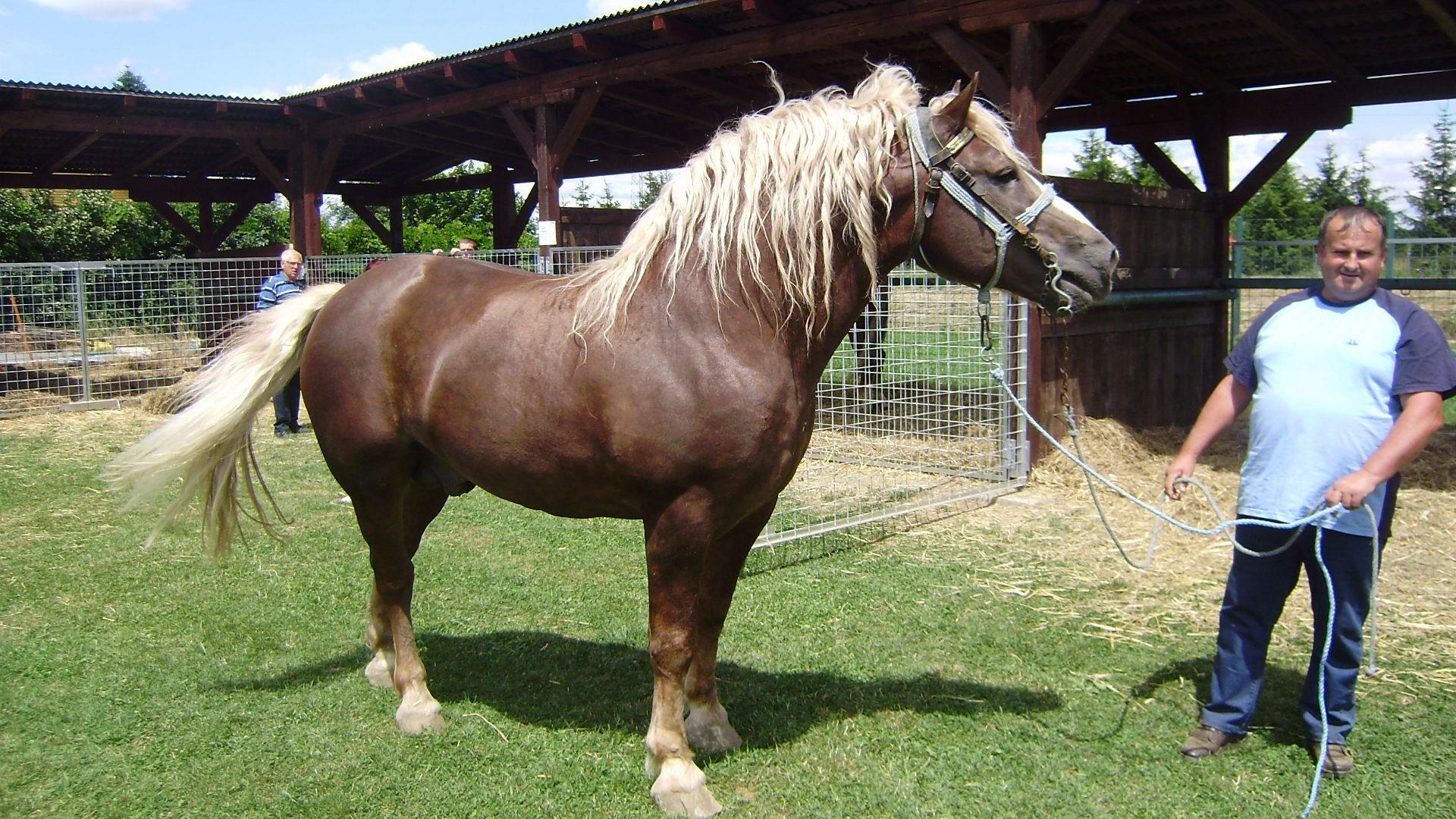 Black Horse Car Sales Mackadown Lane