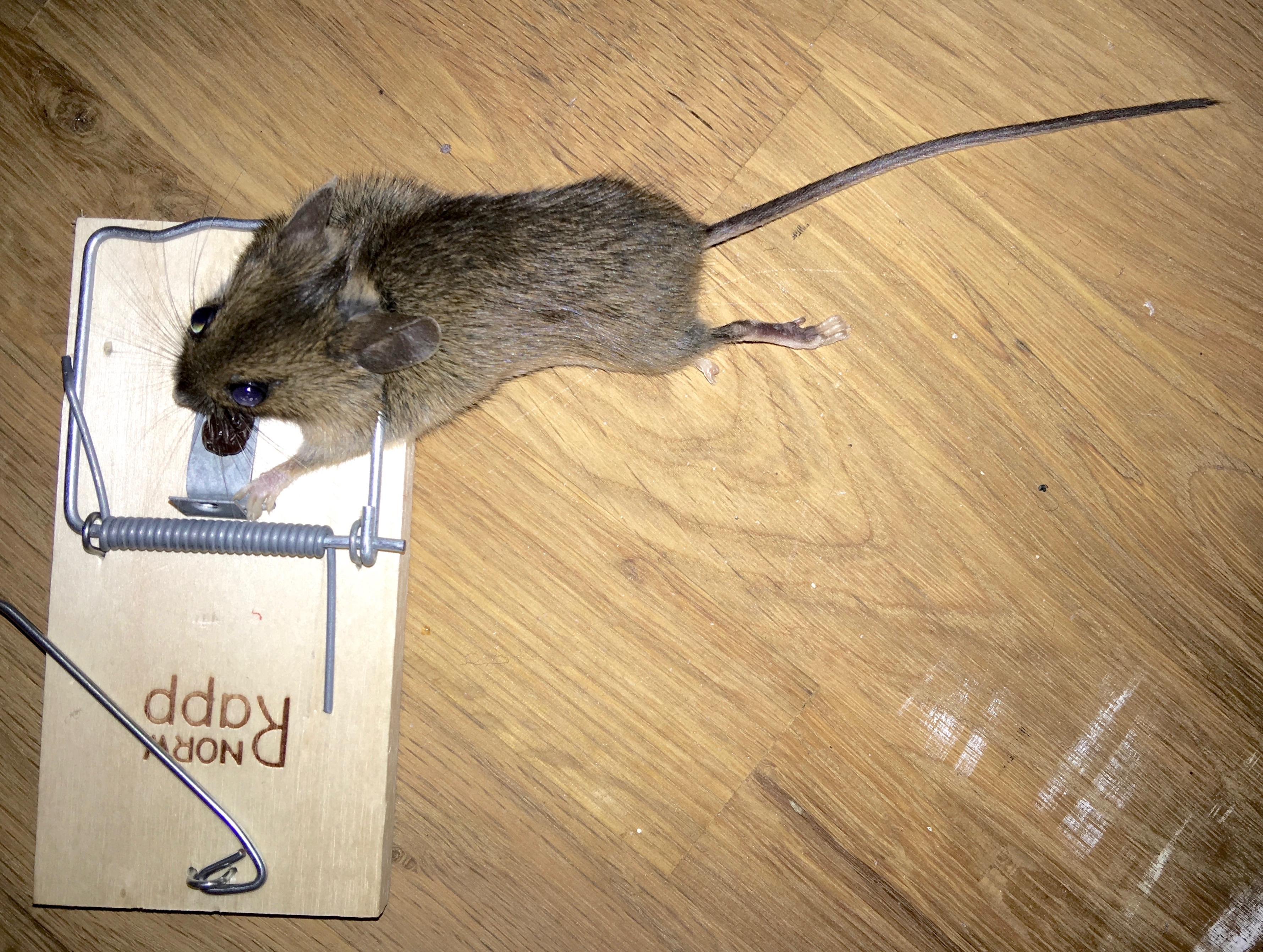 the story of jumping mouse summary