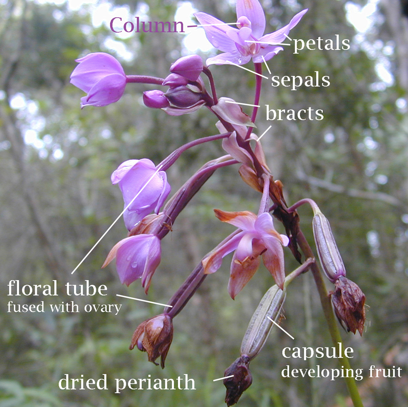 Botany Plant Reproduction Laboratory Flower Wikibooks