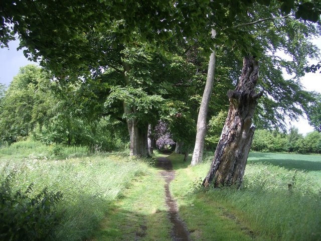 geograph.org.uk - 869694.jpg English: Path by playing fields Path flanked by mature trees skirting the northern edge of Falkland's cricket field. Date 22 June