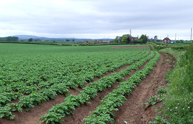 File Potato Field And Crowgreaves Shropshire Geograph Org Uk