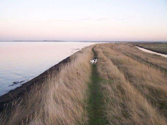 Saxon Shore Way on Sea Wall - geograph.org.uk - 1088957