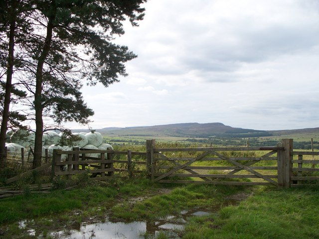 Simonside Hills through a gate - geograph.org.uk - 1483753
