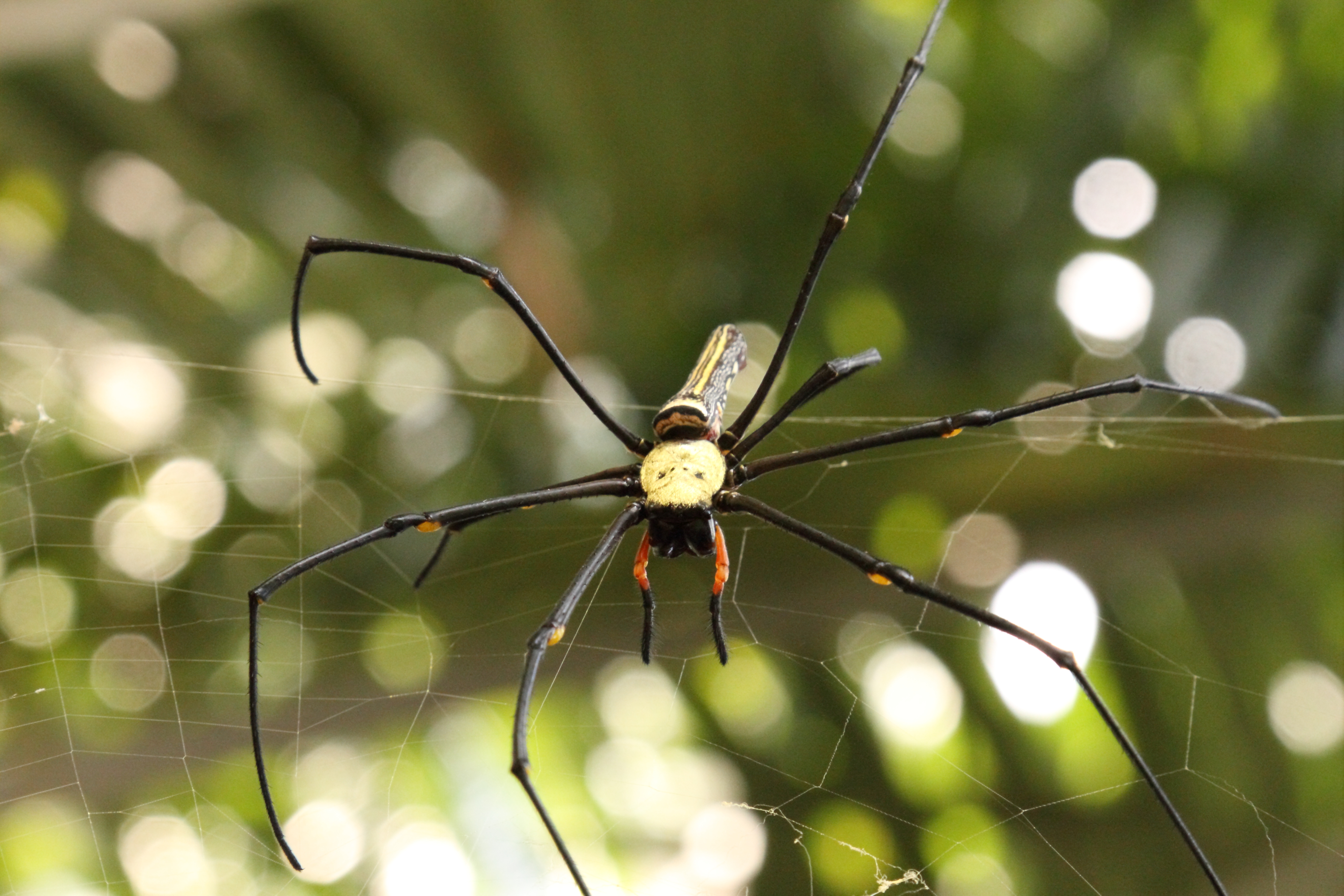 File:Spider in the Mekong Delta (4176497230) jpg - Wikimedia