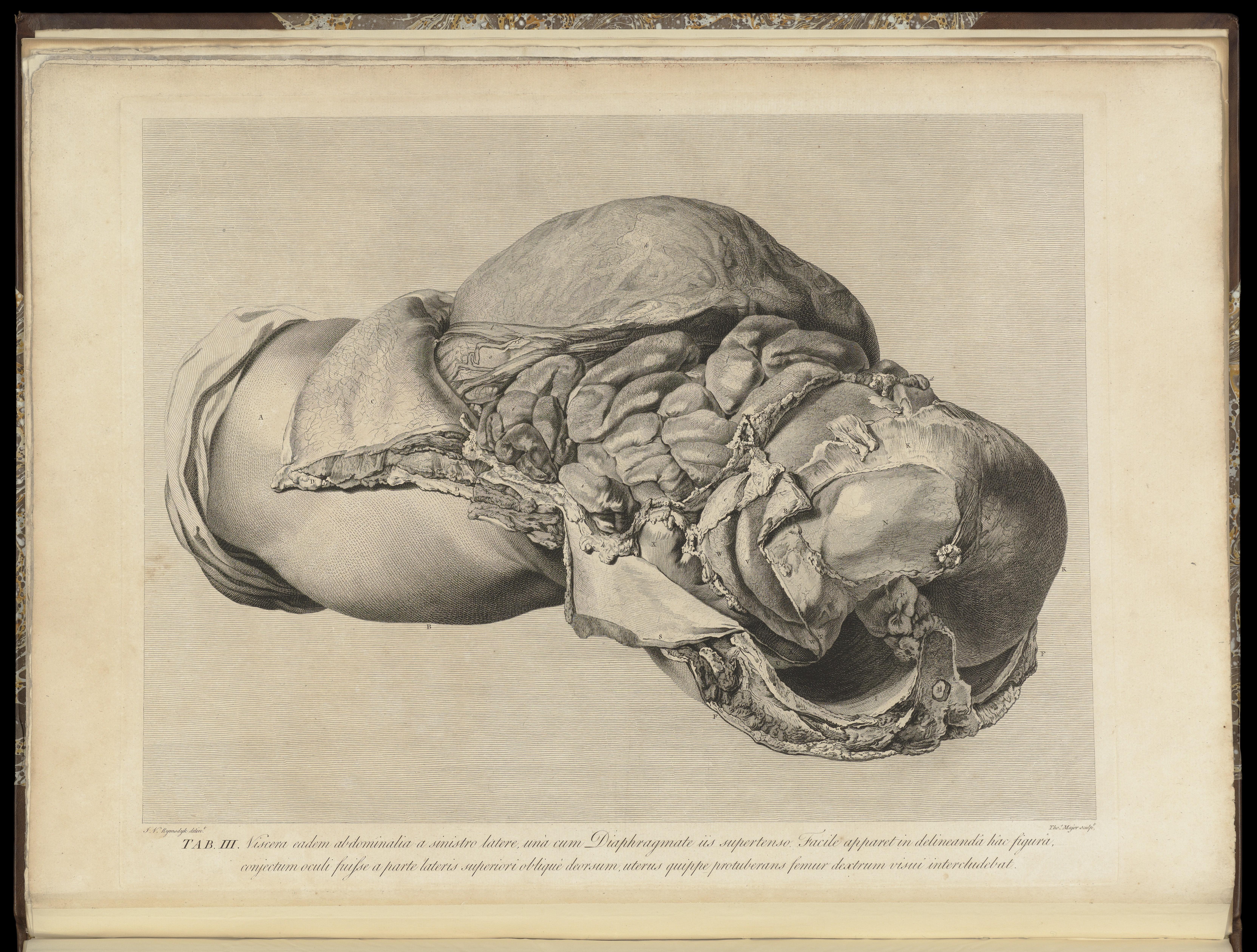 Filethe Anatomy Of The Human Gravid Uterus Exhibited In Figures