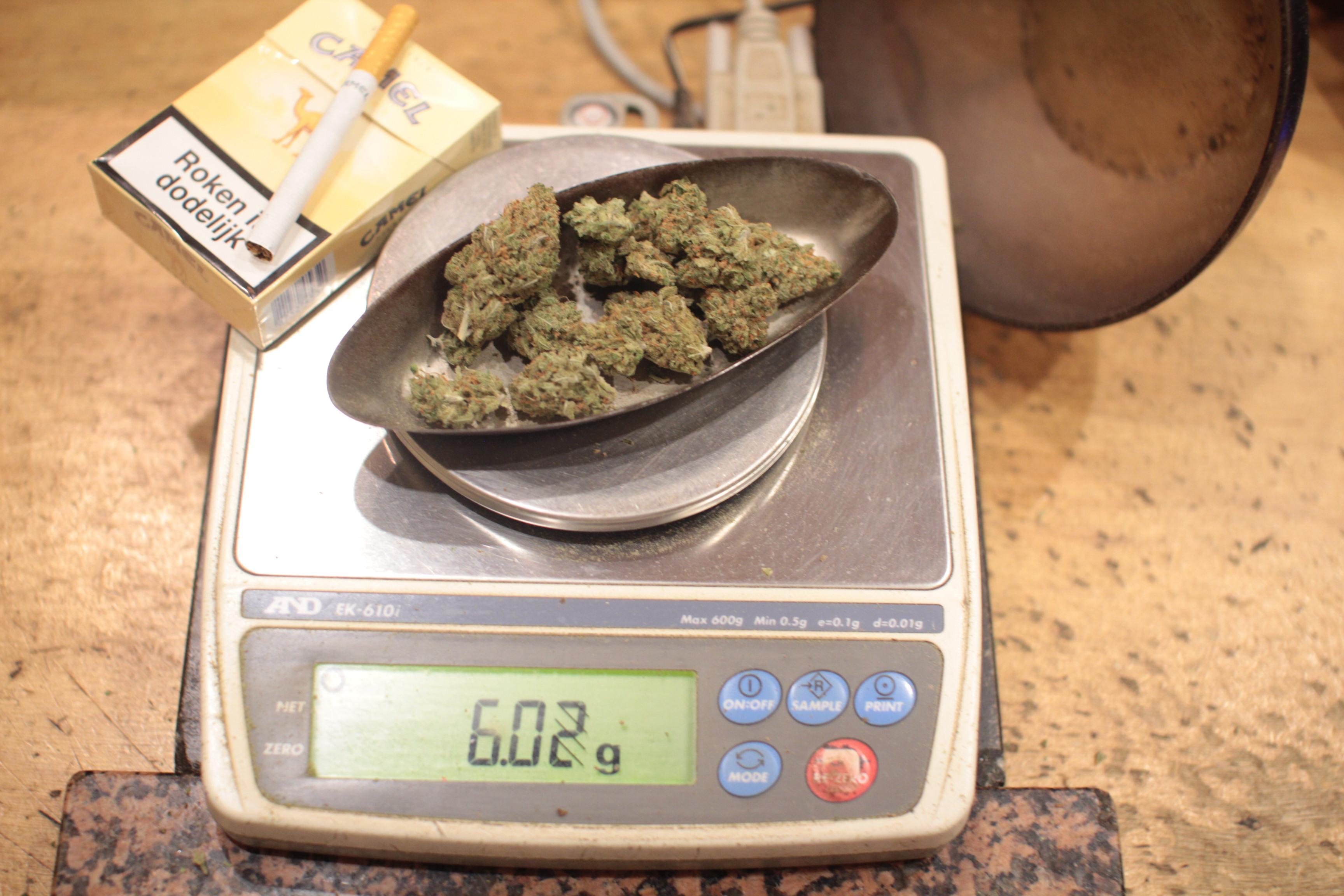 Сколько 10 грамм марихуаны как растет конопля автоцвет