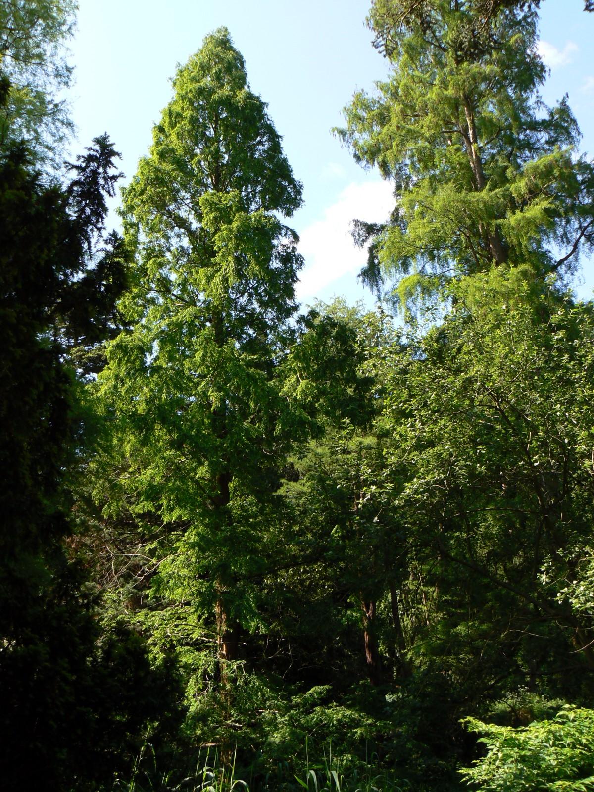 Botanischer Garten Italien Gardasee: Alter Botanischer Garten (Kiel)