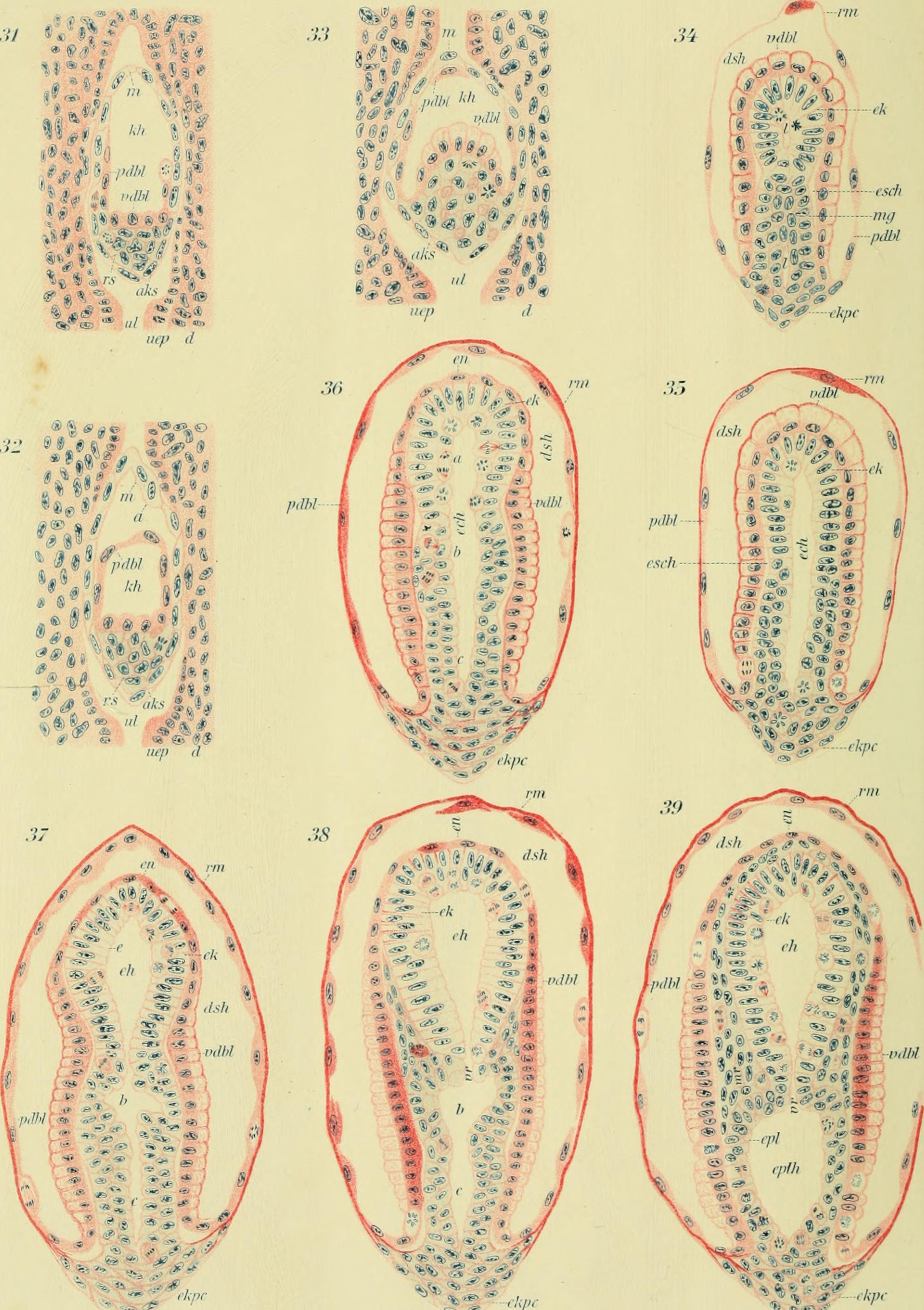 File:Archiv für mikroskopische Anatomie (1907) (20335707011).jpg ...