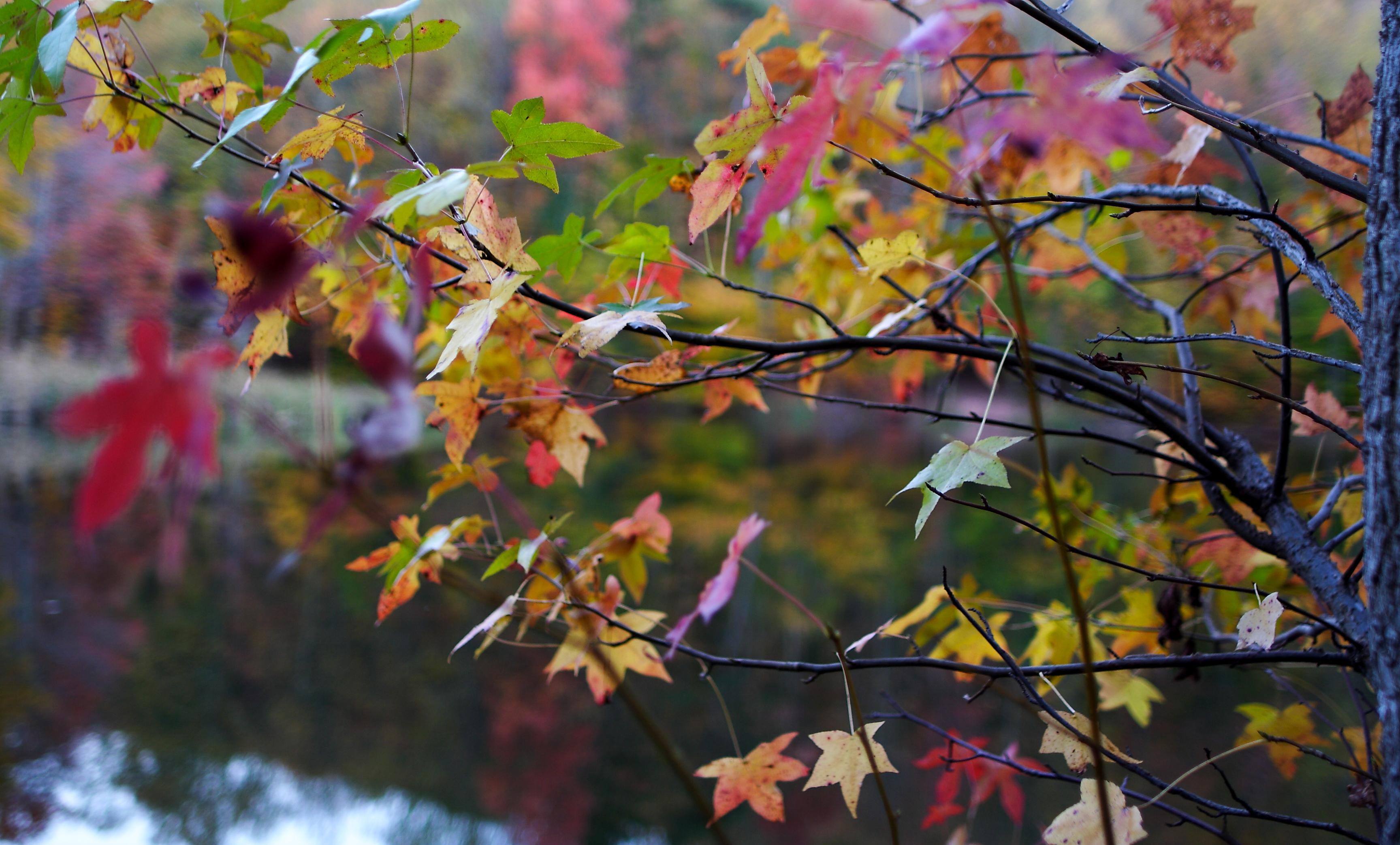 FileAutumn Tree Leaf Colors Bokeh Lake