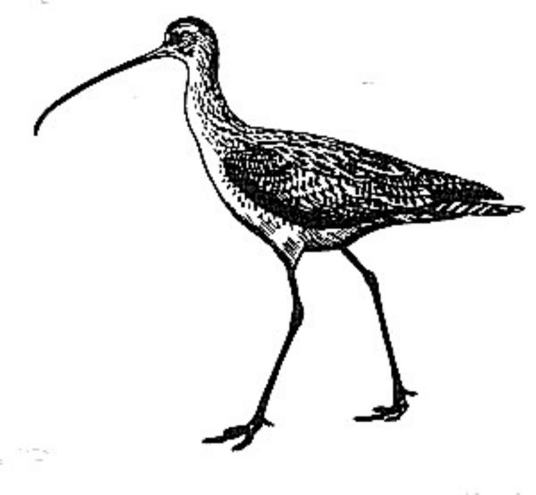 Line Art Birds : File birds line art draw g wikimedia commons