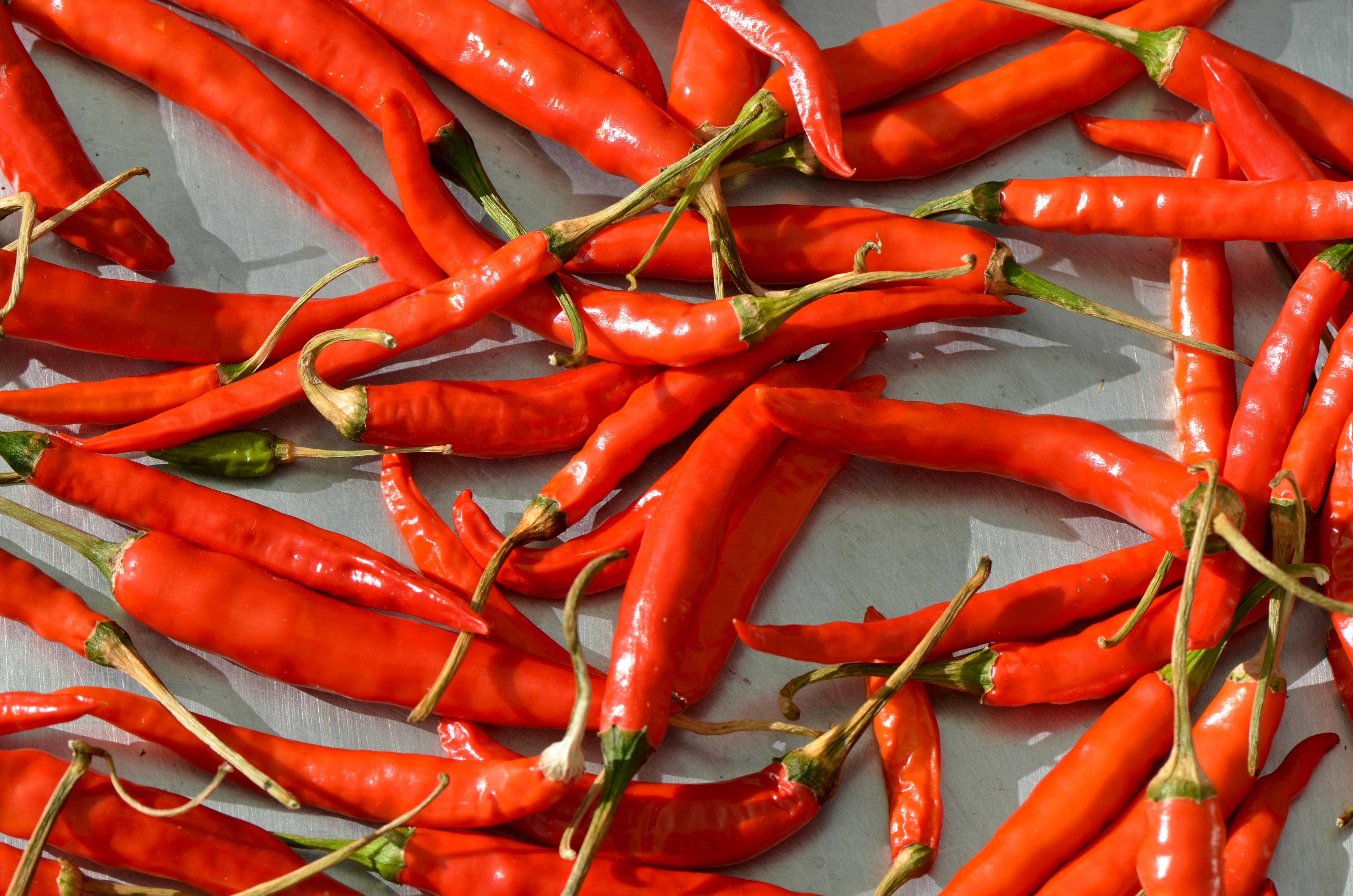 File:Capsicum - red chili chilli - piment rouge - roter