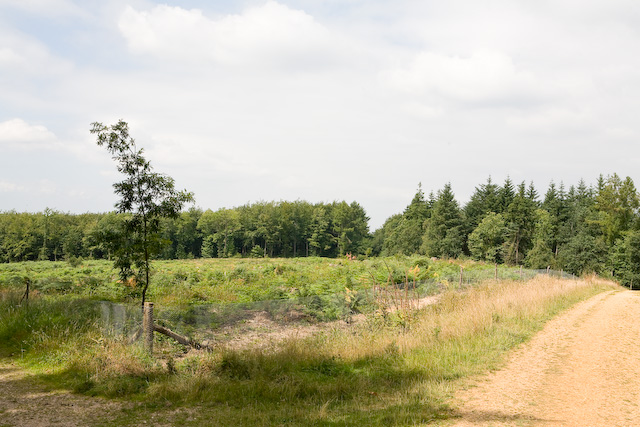Clearing in Stoke Park Wood, Bishopstoke - geograph.org.uk - 895167