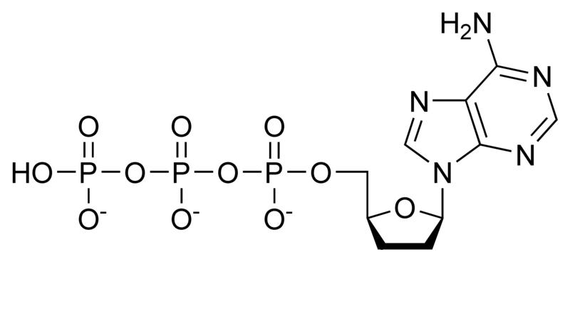 Dideoxiadenosintrifosfat (ddATP)