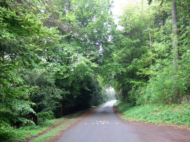 Drive through Wendover Woods - geograph.org.uk - 170053