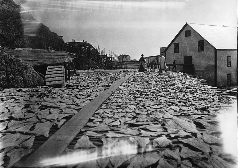 Drying fish, Burgeo, NL, 1908.jpg