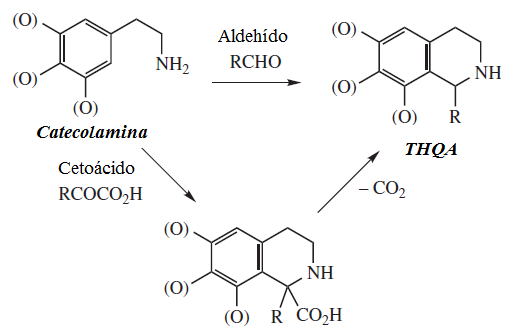 1,2,3,4-Tetrahidroisoquinolines biosynthesis: in (S)-norcoclaurine synthase, the two substrates are 4-hydroxyphenylacetaldehyde and 4-(2-aminoethyl)benzene-1,2-diol, whereas its two products are (S)-norcoclaurine and H2O.