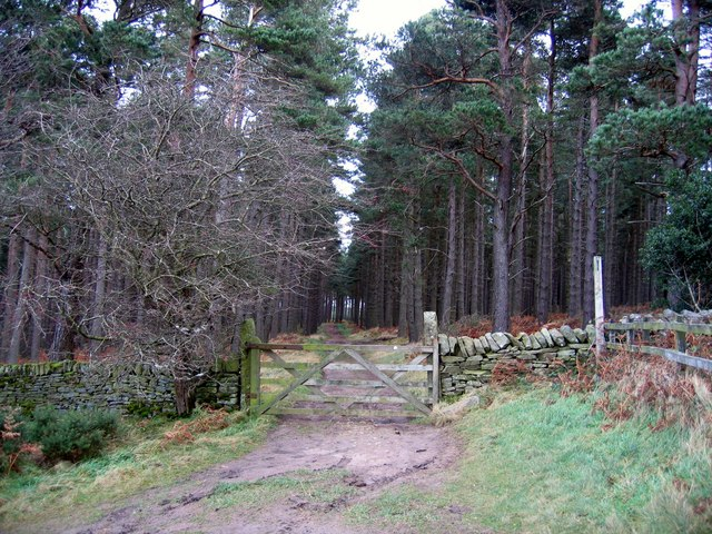 Entrance to Slaley Forest, south-east of Viewley - geograph.org.uk - 620315