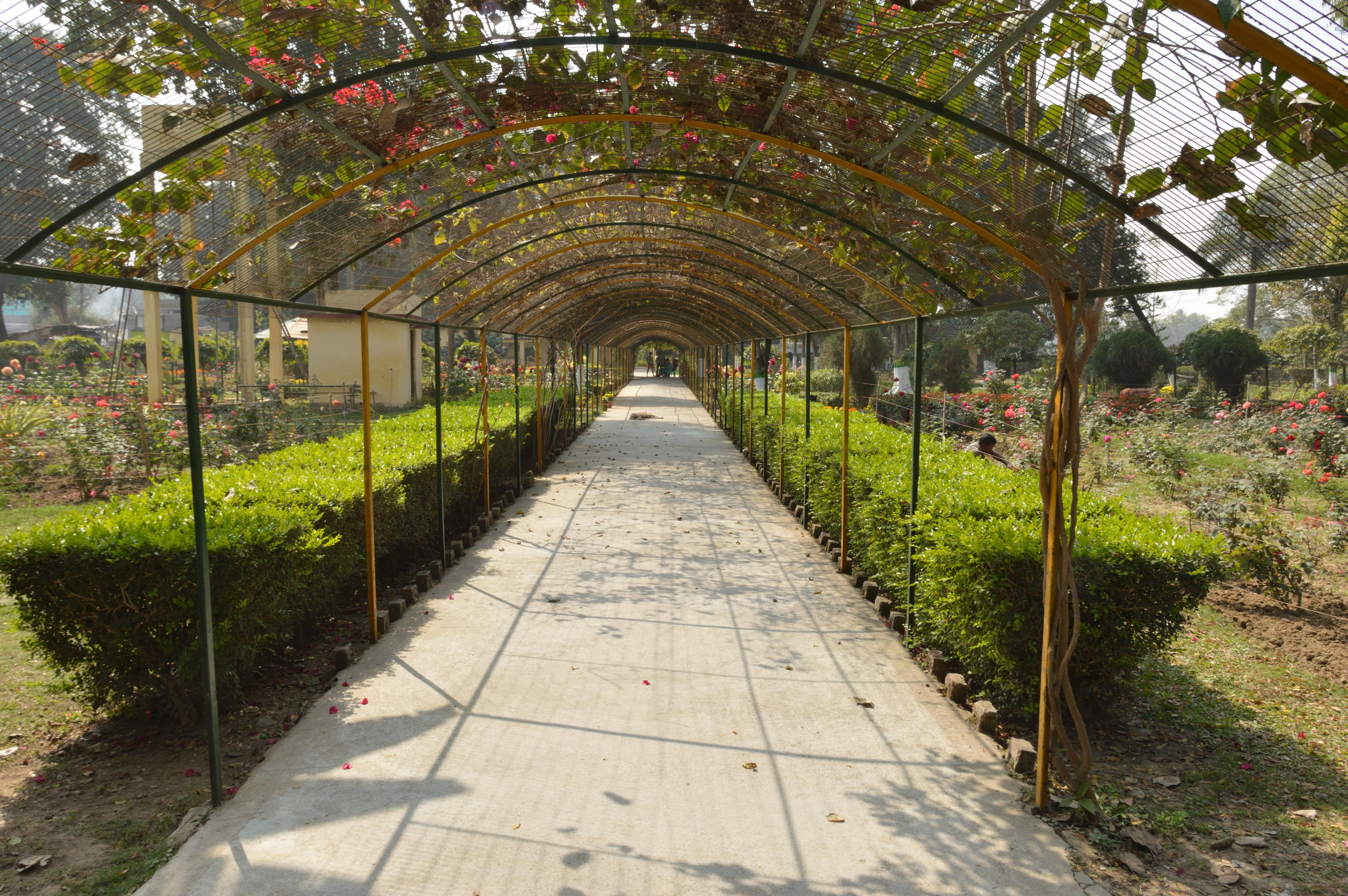 file:flower garden - kalyani picnic garden - kalyani - nadia 2017