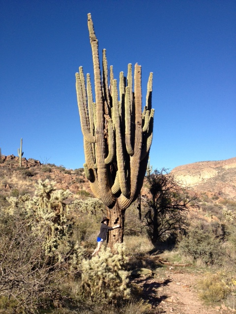 File giant saguaro cactus jpg wikimedia commons for Cactus imagenes