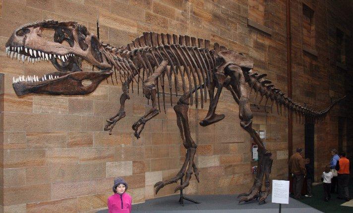 Giganotosaurus Fosil