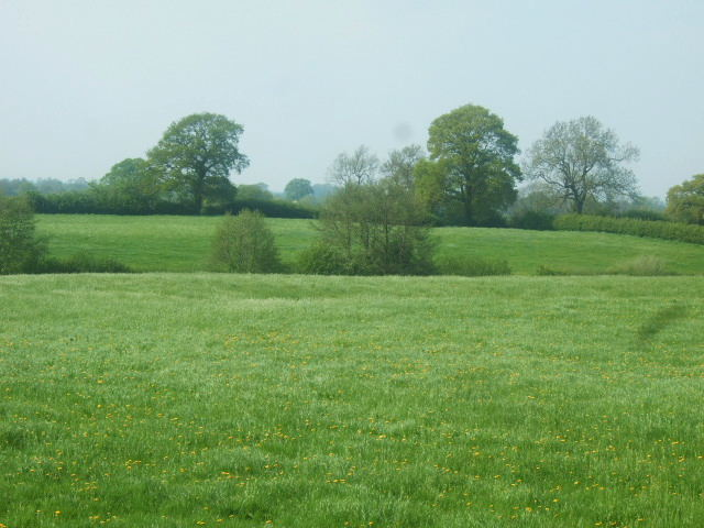 File:Grassland - geograph.org.uk - 793841.jpg
