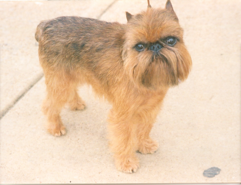 Are Brussel Griffon Dogs Good With Kikds