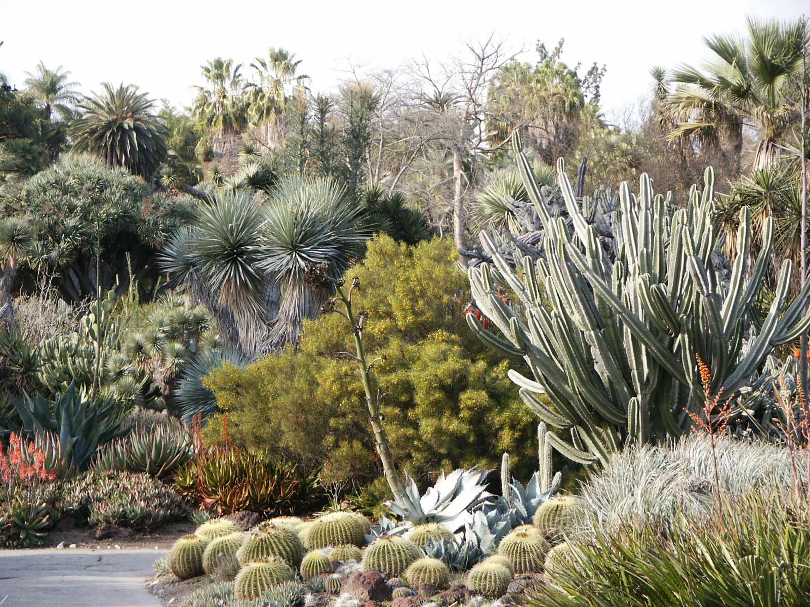 the huntington cactcus garden