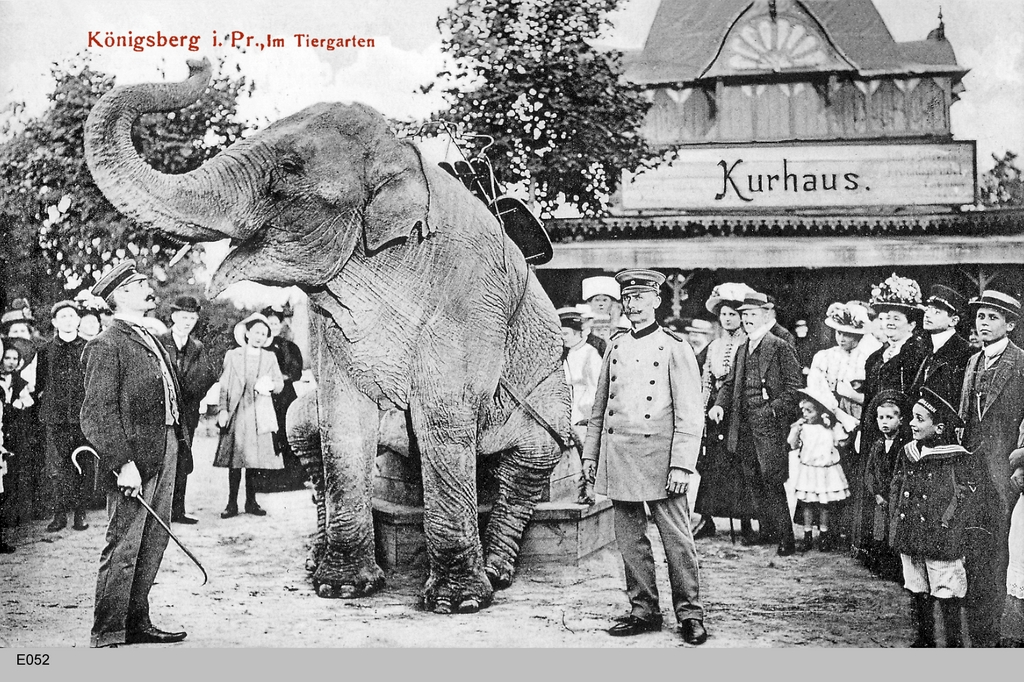Tiergarten Königsberg Elefant, 1908 (source: Wikimedia Commons)