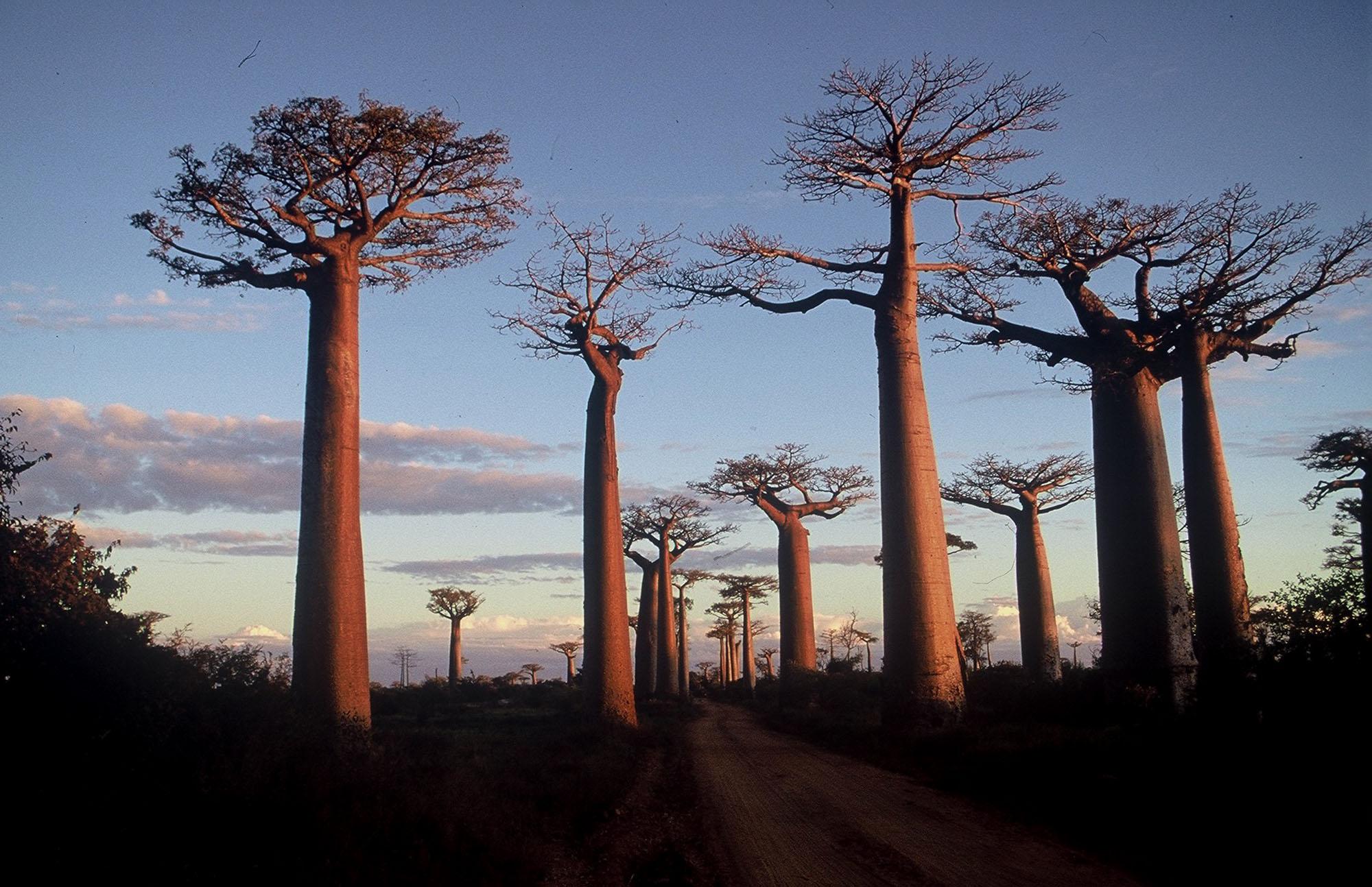 Image Result For Madagascar