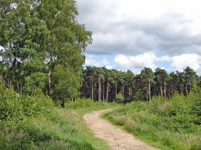 Manley - view along the Sandstone Trail - geograph.org.uk - 499654