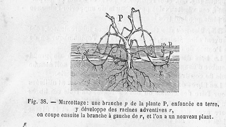 File:Marcottage - principe.jpg
