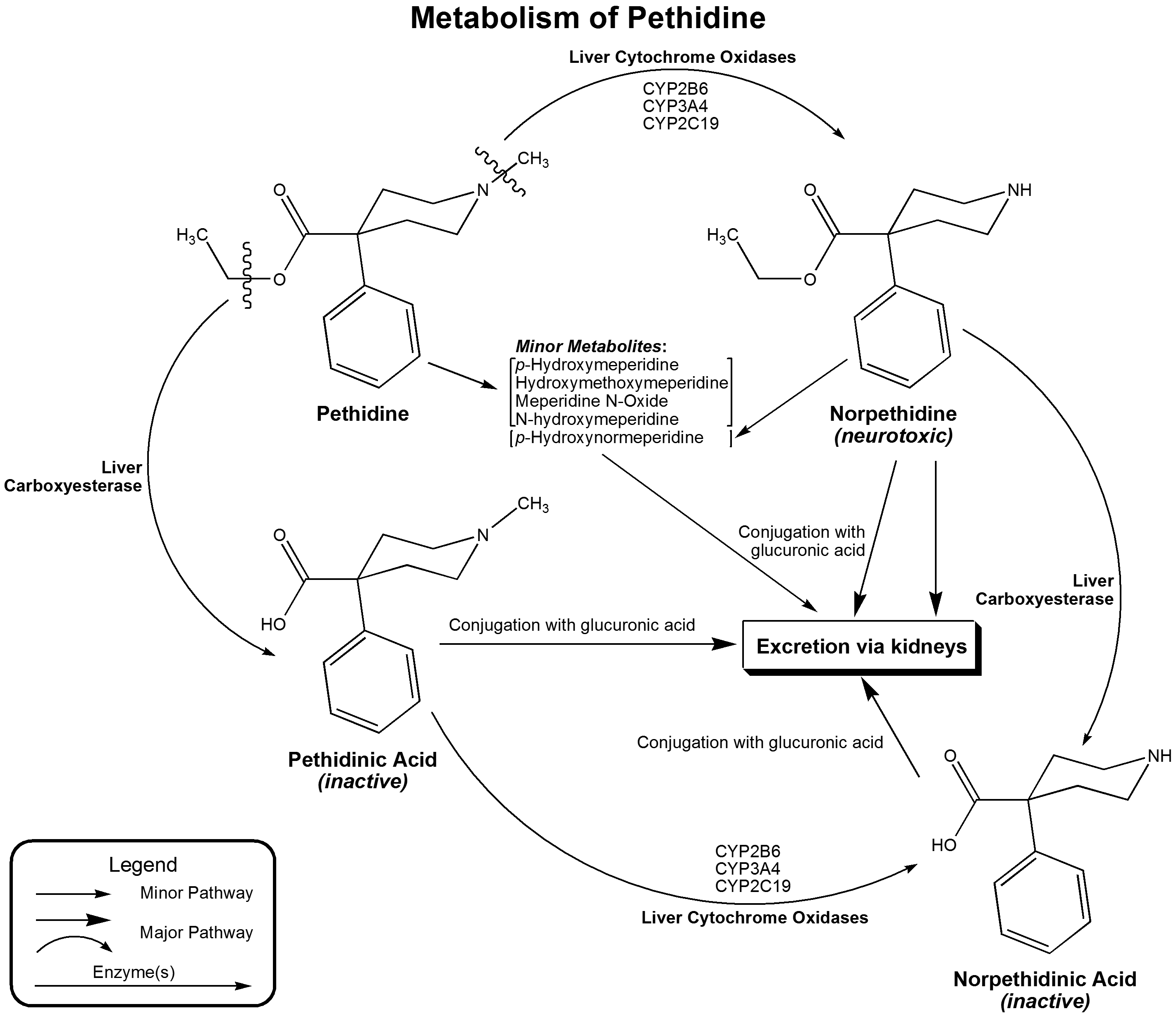 http://upload.wikimedia.org/wikipedia/commons/c/c2/Metabolism_of_pethidine.png