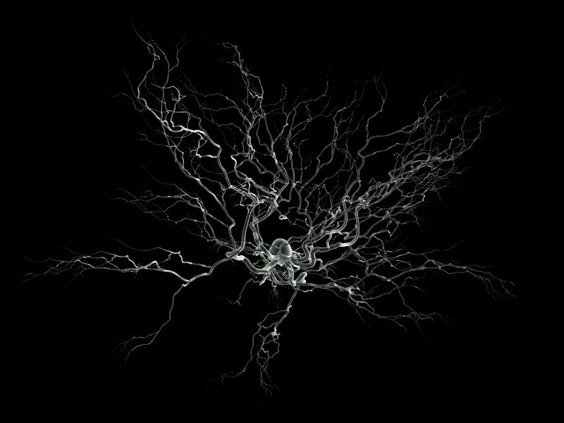 1. Cellules du système nerveux - Aphysionado